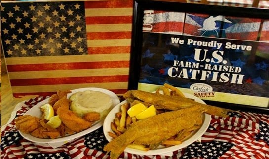 usa catfish
